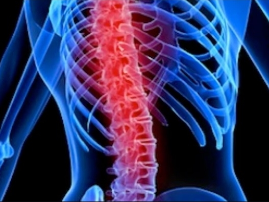 Stem cell therapy shows promise in treating spinal cord injuries, Canadian study