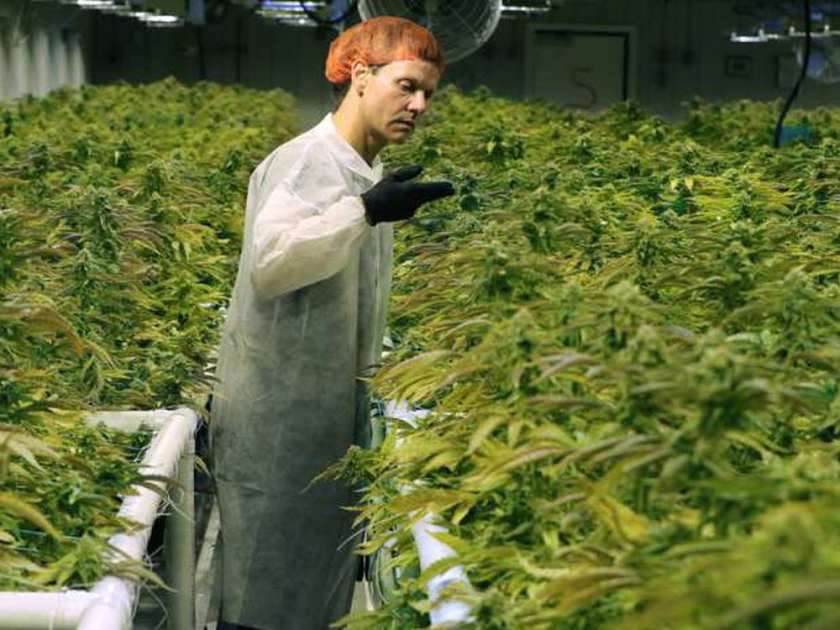 Medical marijuana facility takes root in Pointe-Claire